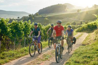 Vier Radfahrer fahren über einen Kiesweg in der Aargauer Natur