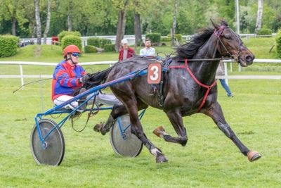 Pferd und Reiter unterwegs am Pferderennen in Aarau